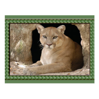 cougar-st-patricks-0065 postales