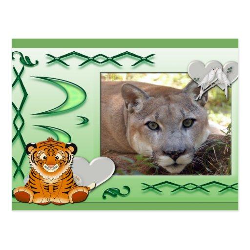 cougar-st-patricks-0069 tarjeta postal