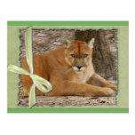 cougar-st-patricks-0072 postal
