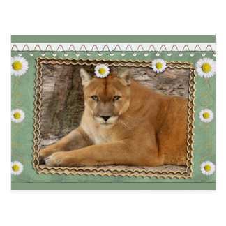 cougar-st-patricks-0076 tarjeta postal