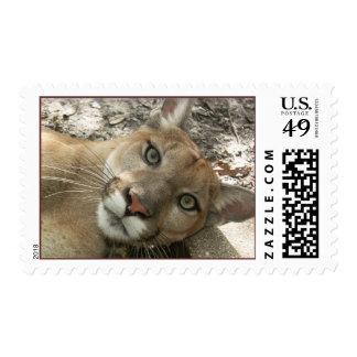 Cougar Stamp