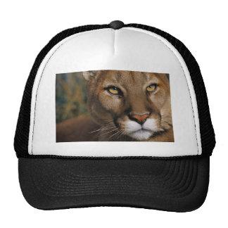 Cougar Stare Trucker Hat