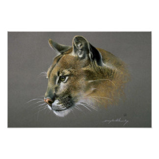 Cougar study poster