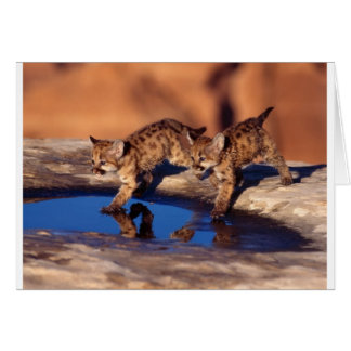 cougar twin cubs greeting cards