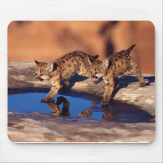 cougar twin cubs mouse pad