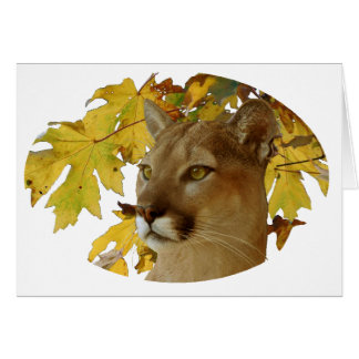 COUGAR UNDER MAPLE CARD