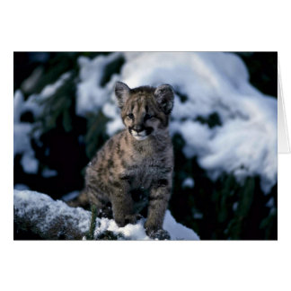 Cougar-young cub in snowy tree card
