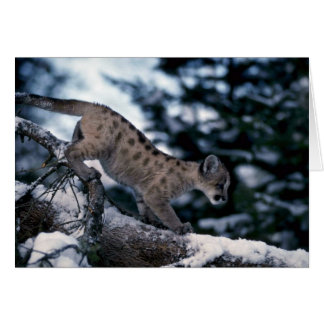 Cougar-young cub in snowy tree greeting card