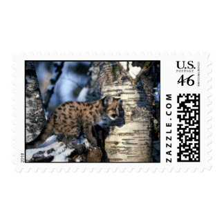 Cougar-young cub in snowy tree postage stamps