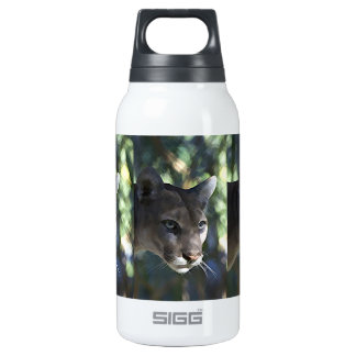 Cougars Insulated Water Bottle