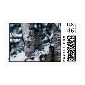 Cougars-young cubs in snowy tree postage stamps