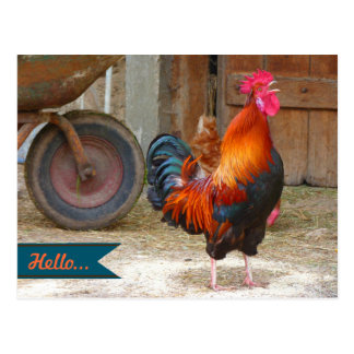 Country Barnyard Rooster Photography Postcard