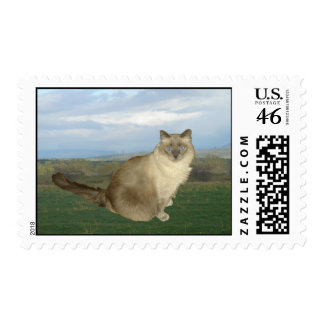 Country Cat Postage