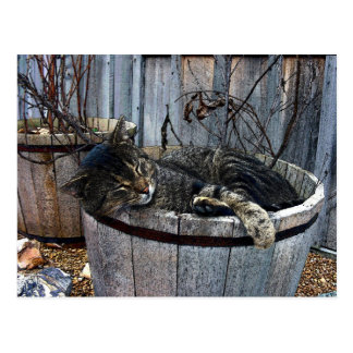 Country Cat Postcard