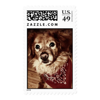 Country Dog Wearing a Bandanna Postage Stamp