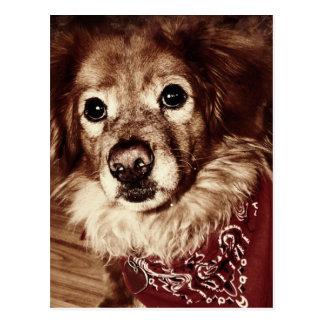 Country Dog Wearing a Bandanna Postcard