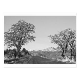 Country Drive Longs Peak View BW Postcard