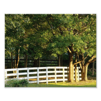 Country Fence of Home 10x8 Photograph Print