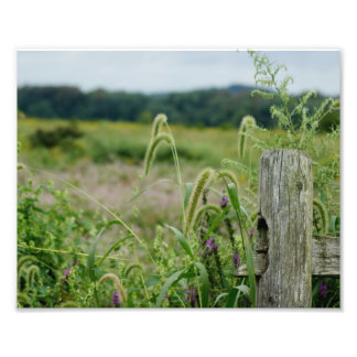 Country Fields 10 x 8 Photographic Print