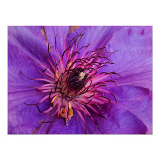 COUNTRY GARDEN FLOWERS PRINT