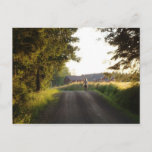 Country Girl Postcard