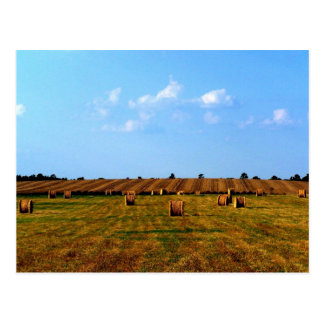 Country Hay Field Postcards