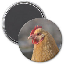 Country Hen Magnet