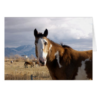 Country Horse Card
