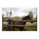 COUNTRY LANDSCAPES POSTCARDS