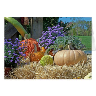 Country Life Autumn Gourds Happy Thanksgiving Greeting Card