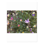 Country Meadow Post Cards