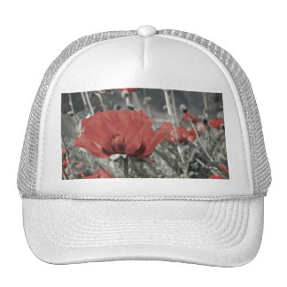 country nature landscape red poppy flower hat