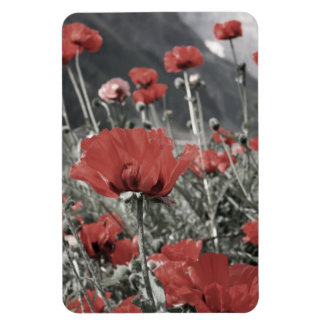 country nature landscape red poppy flower magnet