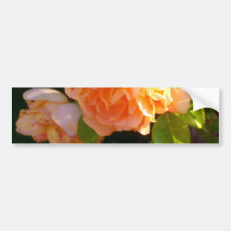 Country Peach Roses Bumper Sticker