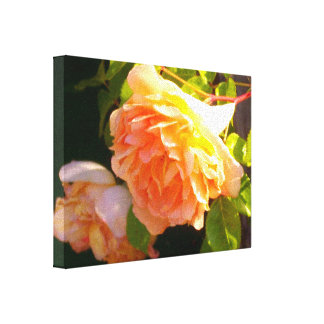 Country Peach Roses Canvas Print