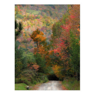 Country Road in Autumn Postcard