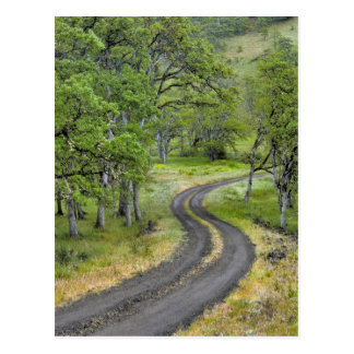 Country road through trees, Oregon Postcard