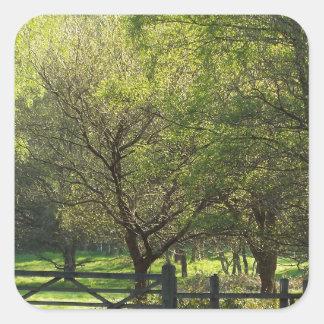 Country Scene Square Sticker