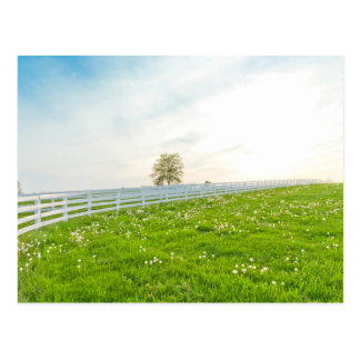 Country spring landscape postcards