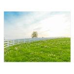Country spring landscape. postcards