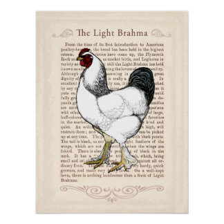 Country Style Kitchen Chicken Wall Art Poster