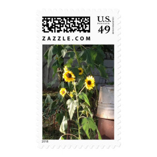 Country Sunflower Stamp