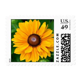 Country Sunflower wedding stamp