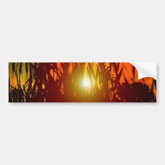 Country Sunset Through a Field Bumper Sticker