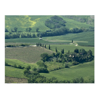 Countryside near Montepulciano, Val d'Orcia, Postcard