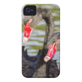 Couple black swans iPhone 4 case