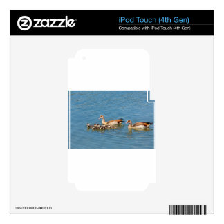 Couple nile geese swimming with newborn young iPod touch 4G skins