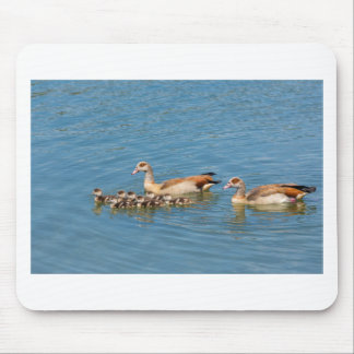 Couple nile geese swimming with newborn young mouse pad