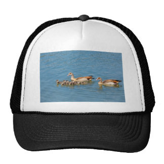 Couple nile geese swimming with newborn young trucker hat