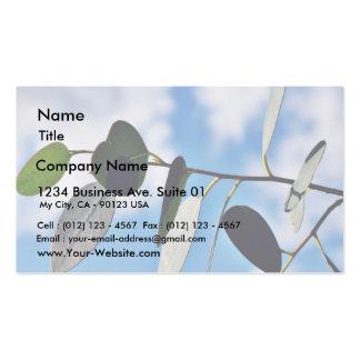 Couple Of Eucalyptus Leaves Agains Blue Sky Business Card Templates